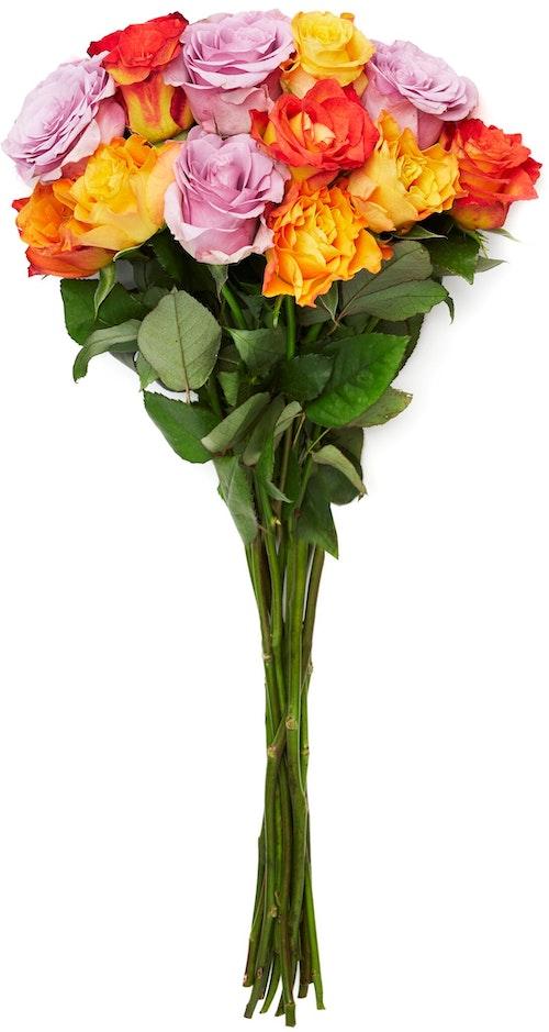 FreshFlowers Roser Mix Varme Farger 35 cm, 12 stk