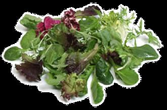 Babyleaf Salatblanding Norge, 100 g