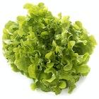 Ekeblad Grønn