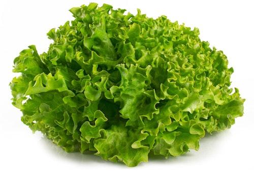 Lollosalat Grønn Spania/Italia, 400 g
