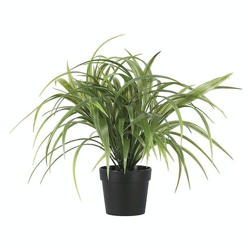 Clas Ohlson Naturtro gressplante Høyde 35cm, 1 stk