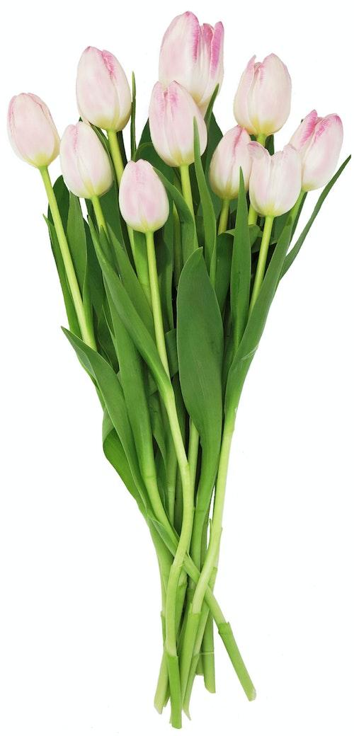 FreshFlowers Tulipaner Rosa 10pk 1 stk