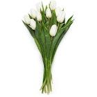 Tulipaner Hvit