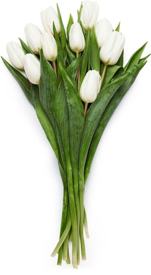 FreshFlowers Tulipaner Hvit 10 stk