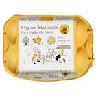 Solgule Egg Fra Frittgående Høner 6 Pk