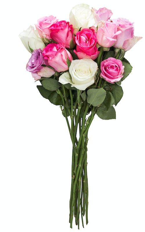 FreshFlowers Roser Mix Kalde Farger 35 cm, 12 stk