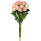 Roser Belle Rose