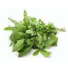 Grønn Basilikum Gourmet