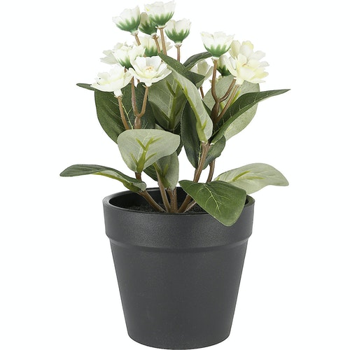 Clas Ohlson Naturtro miniplante med hvit blomst 1 stk
