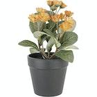 Naturtro miniplante med orange blomst